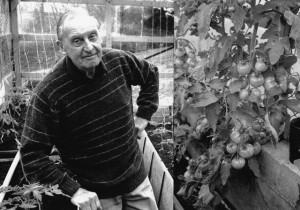 John Bowden and his legendary glasshouse tomatoes